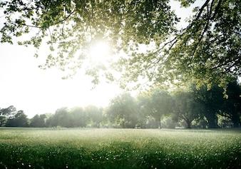 Conceito cénico do ambiente verde do parque do campo