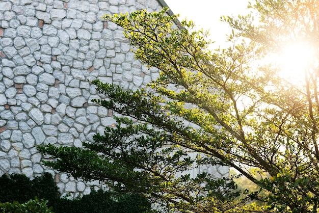 Conceito da flora da natureza do ramo de árvore