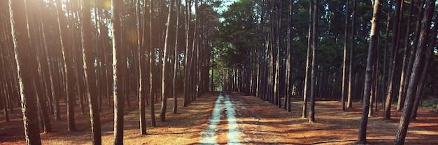 Conceito da natureza da trilha rural de forrest do caminho