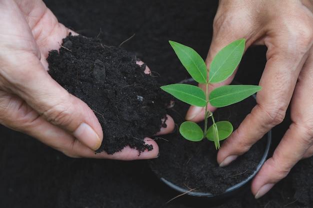 Conceito da plântula pela mão humana com a árvore nova no fundo da natureza.