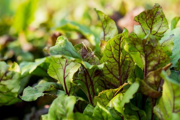 Conceito de agricultura de plantas orgânicas