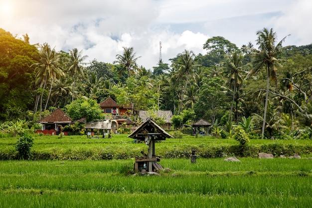 Conceito de aldeia de bali. bela selva e campos de arroz da ásia.