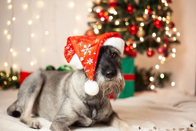 Conceito de ano novo, natal. cão engraçado com uma barba em um chapéu de papai noel no fundo de guirlandas e uma árvore de natal.