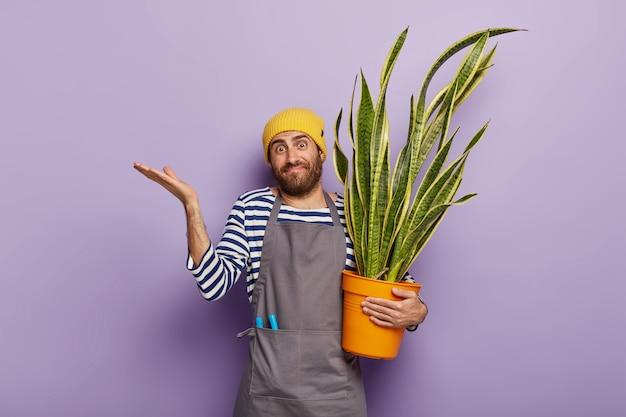 Conceito de botânica e jardinagem. cultivador de flores duvidoso segurando uma planta cobra suculenta em um vaso