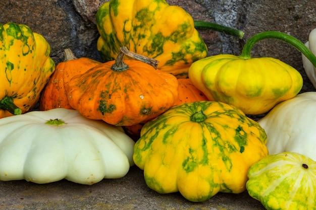 Conceito de composição de outono de abóbora multicolorida do dia de ação de graças ou dia das bruxas