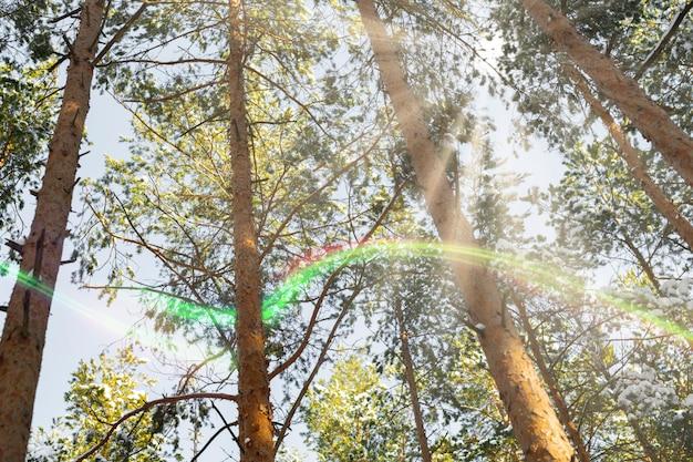 Conceito de conto de fadas de luzes de floresta. sol luzes na floresta selvagem