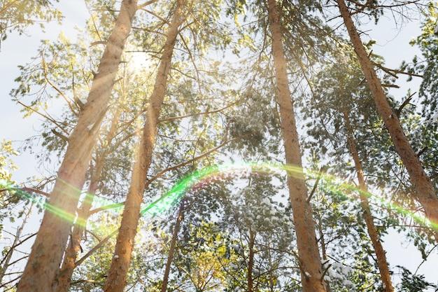 Conceito de conto de fadas de luzes de floresta. sun ilumina-se na floresta selvagem. bom dia para esporte ativo