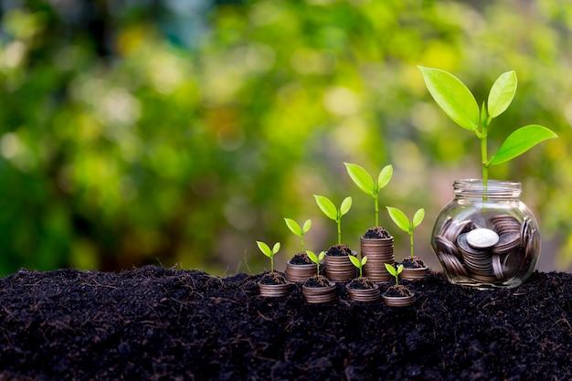 Conceito de crescimento de poupança, planta brotando do chão