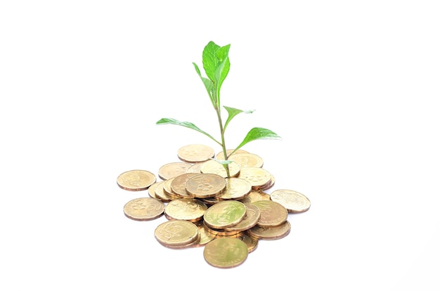 Conceito de crescimento financeiro, pilha de moedas de ouro sobre fundo branco