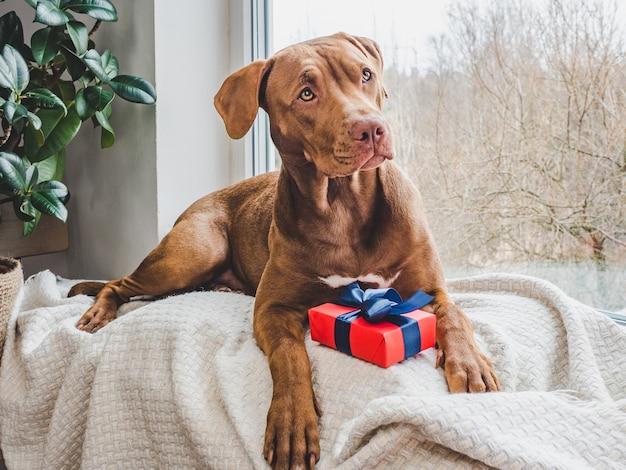 Conceito de cuidado, educação, treinamento de obediência, criação de animais de estimação