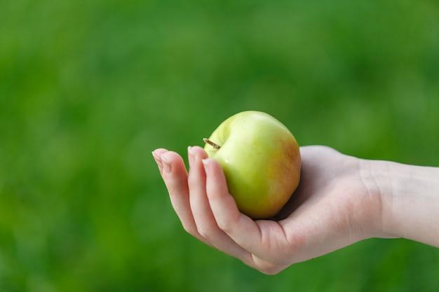 Conceito de cultivo, jardinagem, colheita e pessoas - mãos de mulher segurando maçãs
