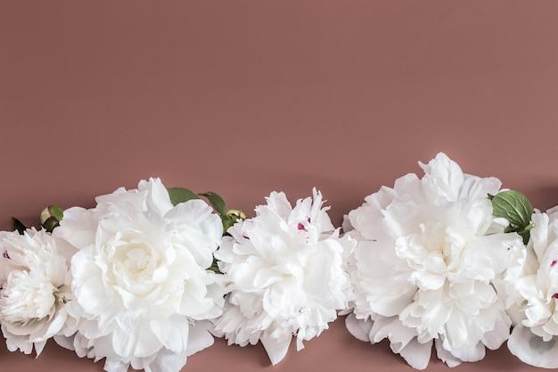 Conceito de design - vista superior do ramo de lindas flores na parede colorida com espaço de cópia