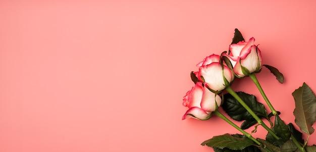 Conceito de dia dos namorados. rosas cor de rosa em fundo rosa sólido com espaço de cópia. bandeira