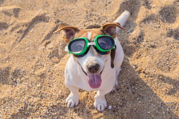 Conceito de diversão passatempo com cachorro no verão