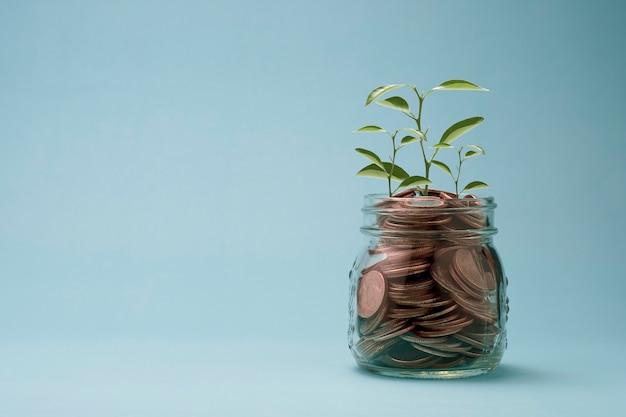 Conceito de economia de investimento com crescimento de plantas em moedas de dinheiro no frasco