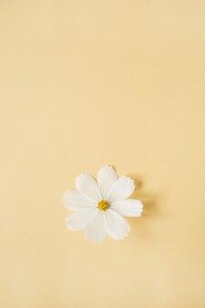 Conceito de estilo mínimo. flor de camomila margarida branca contra amarelo pálido