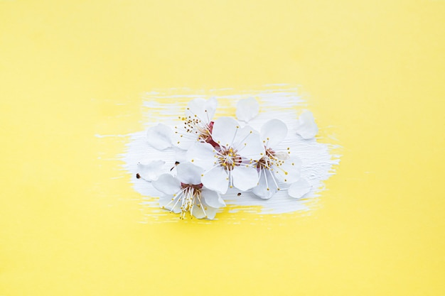 Conceito de flor de primavera. ramo de cerejeira desabrocham em fundo amarelo.