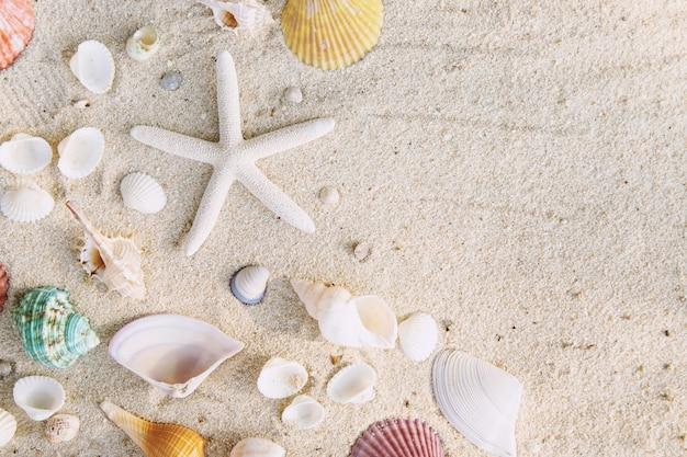 Conceito de horário de verão com conchas do mar e estrelas do mar na mesa de areia branca da praia. espaço livre para a sua decoração vista superior.
