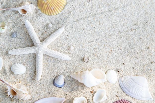 Conceito de horário de verão com conchas do mar e estrelas do mar no fundo branco de areia da praia. espaço livre para a sua decoração vista superior.
