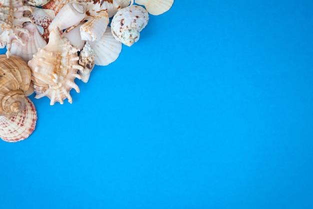 Conceito de horário de verão com conchas do mar em um fundo azul