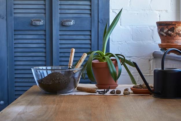 Conceito de jardim em casa, flores de plantas de casa