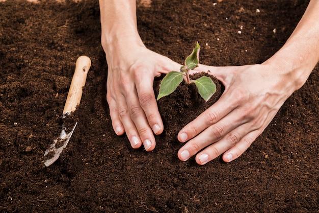 Conceito de jardinagem com mãos femininas
