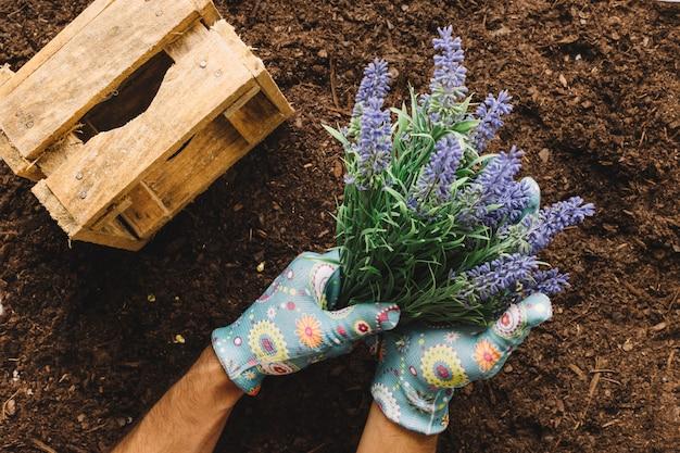 Conceito de jardinagem com mãos plantando flor