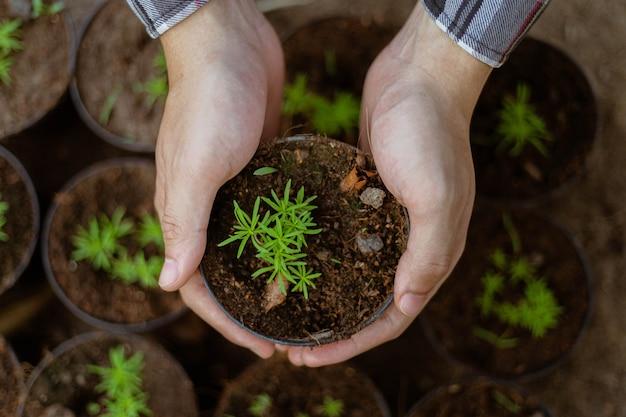 Conceito de jardinagem: um agricultor abatendo as mudas verdes antes de removê-las dos vasos para cultivá-las no terreno preparado.