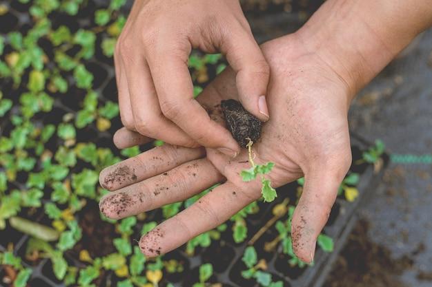 Conceito de jardinagem um agricultor trazendo mudas em vasos de viveiro se preparando para crescer nas parcelas de solo.