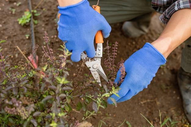 Conceito de jardinagem: um fazendeiro que coleta a prole recortando as partes exigidas das plantações.