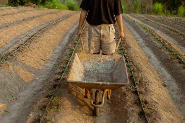 Conceito de jardinagem: um jovem agricultor empurrando um carrinho de jardinagem entre as hortas em seu pequeno jardim tranquilo.