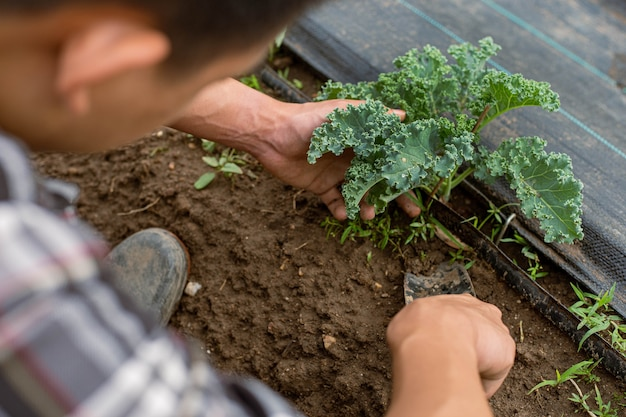 Conceito de jardinagem: um jovem jardineiro do sexo masculino cuidando de um vegetal, removendo o solo ao redor da planta.