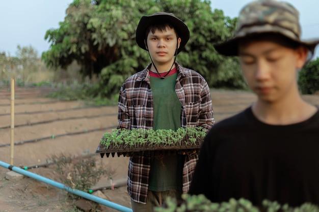 Conceito de jardinagem: várias plantas verdes replantadas em espaços maiores para permitir que as plantas cresçam.