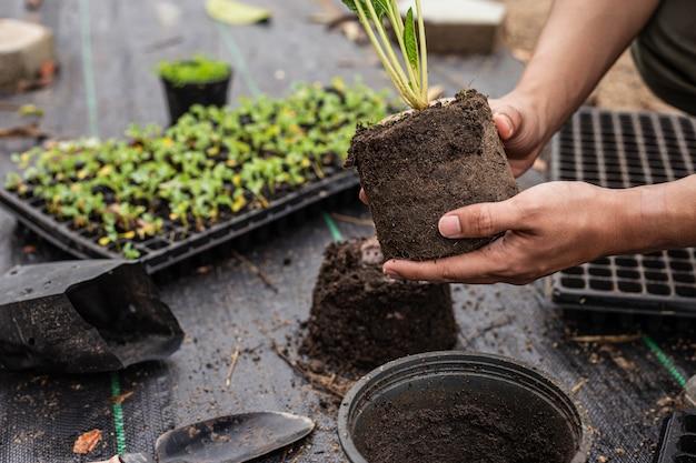 Conceito de jardinagem: várias plantas verdes replantadas em vasos maiores para permitir que as plantas cresçam ainda mais.