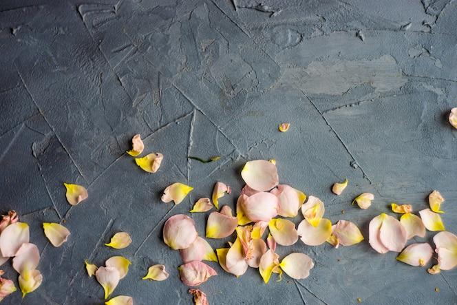 Conceito de lindo cartão floral com rosas frescas