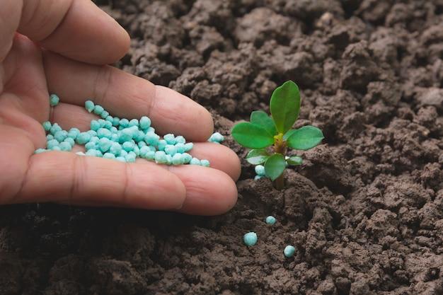 Conceito de mudas por mão humana aplicar árvore jovem de fertilizante sobre fundo verde