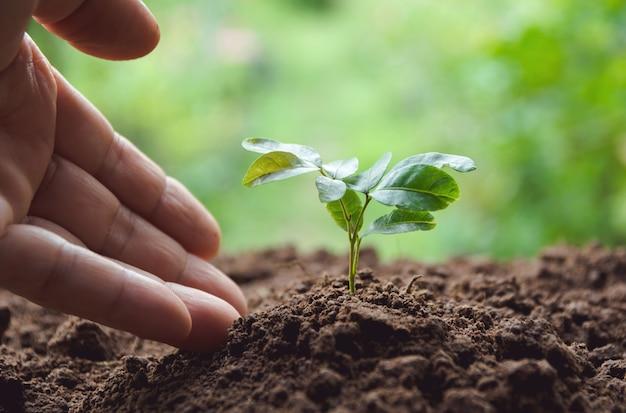 Conceito de mudas por mão humana com árvore jovem no fundo da natureza