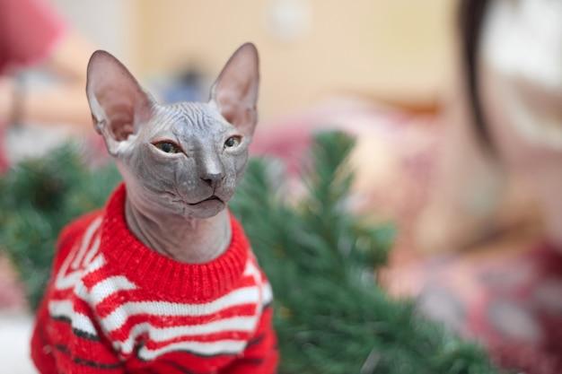 Conceito de natal, gato sphynx com uma jaqueta vermelha perto da árvore de natal, cópias do espaço. foto de alta qualidade