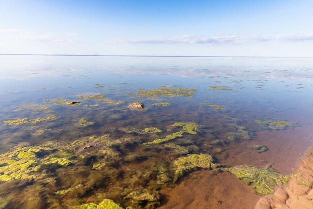 Conceito de natureza morta. o esgoto sujo causou um rápido crescimento de algas tóxicas no lago e no mar