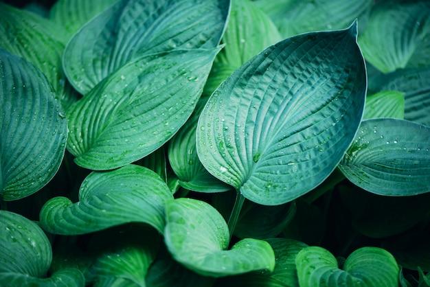Conceito de natureza. vista do topo. close-up de folhas verdes. folha tropical.