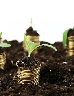 Conceito de negócio: moedas de ouro no solo com plantas jovens, isoladas no branco
