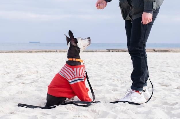 Conceito de obediência do cão. o cão obedece ao treinador.
