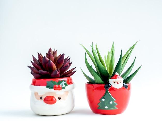 Conceito de objeto de natal, plantas suculentas verdes e vermelhas em lindos vasos de cerâmica do papai noel