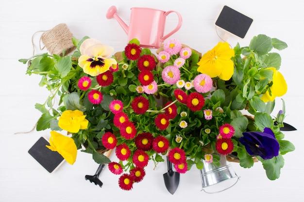 Conceito de obras de jardim primavera. ferramentas de jardinagem, flores em vasos e regador na mesa branca. vista superior, plana