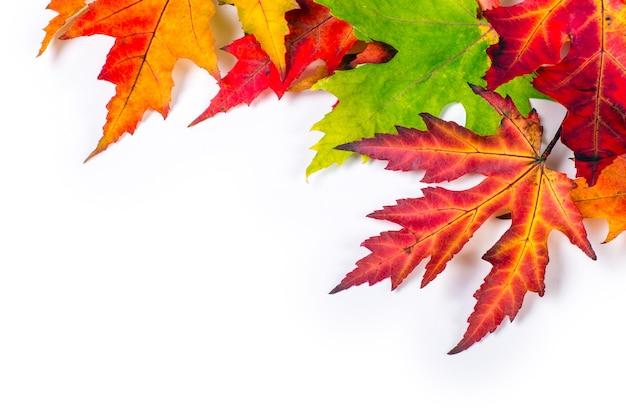 Conceito de outono isolado de folhas coloridas pela mudança sazonal natural do verão ao outono.