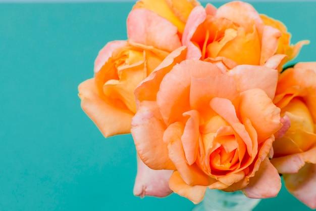 Conceito de pétalas de rosa laranja close-up