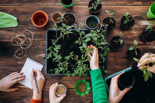 Conceito de plantio de mudas em casa segurando ferramentas de jardim. mãos de meninas e pequenos brotos