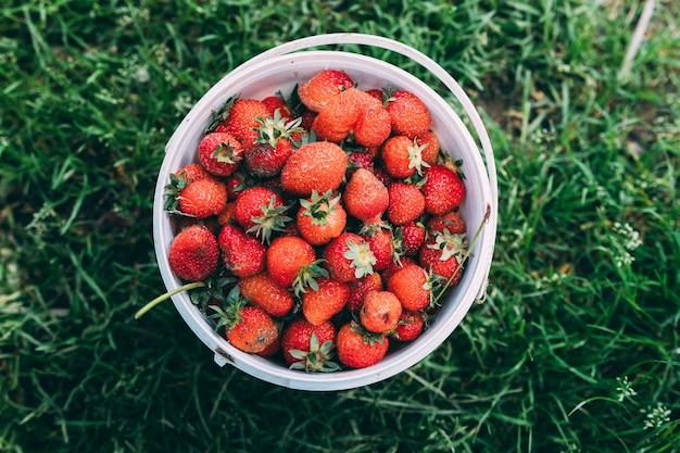 Conceito de pomar com morangos no balde