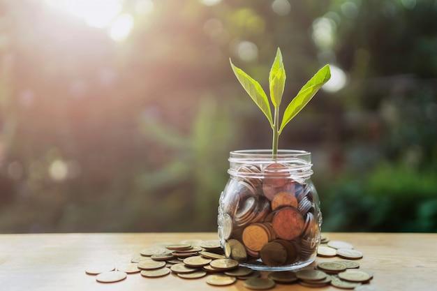 Conceito de poupar dinheiro crescente. planta no copo de jarro com pilha de dinheiro e sol