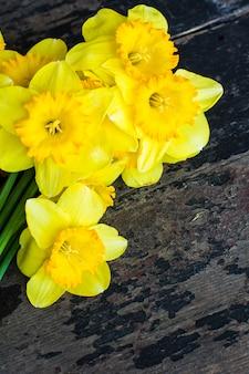 Conceito de primavera com flores narcisos amarelos brilhantes
